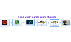 Food Chain Before Zebra Mussels
