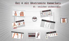 Üst & Alt Ekstremite Damarları tıp 2-dr.nes