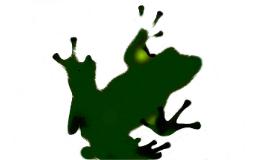 개구리의 한살이 (복사 편집)