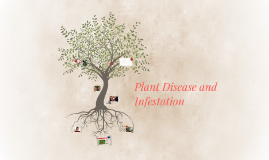 Plant Disease and Infestation