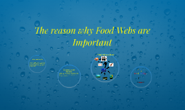 The reason why Food Webs are Important