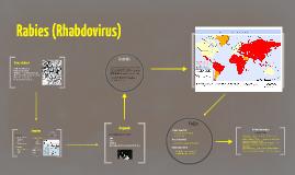 Rabies (Rhabdovirus)