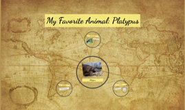 My Favorite Animal: Platypus