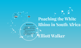 Poaching the White Rhino in South Africa