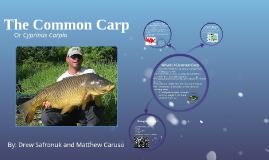 The Common Carp