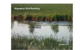 Migratory Bird Banding in Salt Lake