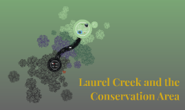 Laurel Creek and the Conservation Area