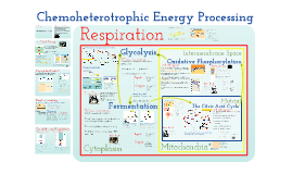4.3 - Respiration