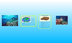 tropical ocean   gabby