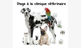 Stage a la clinique vétérinaire