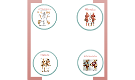 Sistema osteo artro muscular PARTE 2