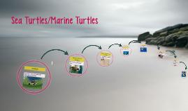 Copy of Sea Turtles/Marine Turtles