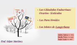 Copy of Las Glandulas Endocrinas: Ovarios-Testiculos.