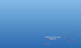 TERÀPIA DE LA CÈL·LULA SOMÀTICA