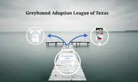 Greyhound Adoption League of Texas