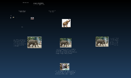 Stephen's Zoo