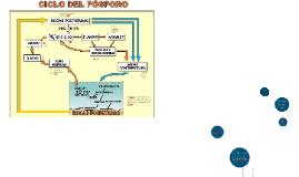 Copy of Copy of ECOLOGIA: CICLO DEL FOSFORO