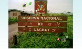 Copy of Reserva Nacional Lomas de Lachay