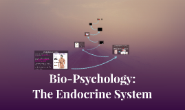 Bio-Psychology: The Endocrine System
