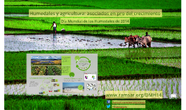 Humedales y agricultura: asociados en pro del crecimiento