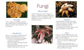 Copy of Copy of Fungi