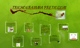 TRICHOGRAMMA PRETIOSUM