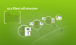 10.4 Plant cell structure AQA Biology AS