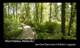 Virtual Field Trip: West Hylebos Wetlands