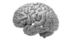Bioevolución_III_Tallo encefálico