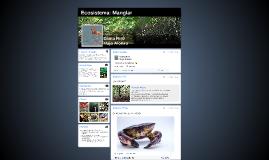 Ecosistema: Manglar