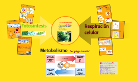 Copy of Metabolismo