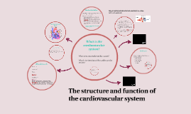 Copy of The structure and function of the cardiovascular system