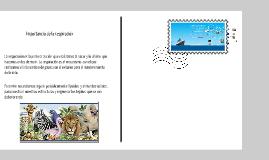 Copy of Respiración aérea y acuática