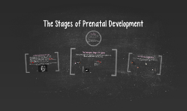 Copy of The Stages of Prenatal Development