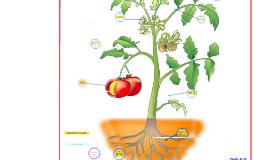 Copy of Partes de una Planta