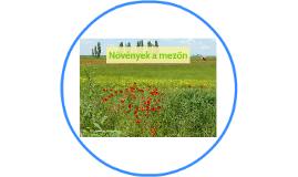 Copy of Növények a mezőn