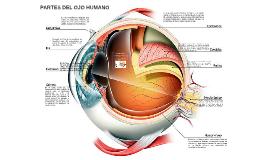 Aunque el ojo es denominado a menudo  el órgano de la visión