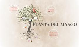Copy of PLANTA DEL MANGO