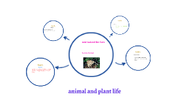 Copy of animals and plant life