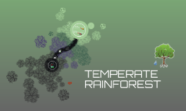 Temperature Rainforest