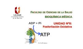 Clase Nº24 Unidad Nº8 Fosforilación Oxidativa