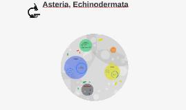 Asteria amurensis,Echinodermata