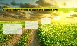 Rhizobacterias Promotoras del Crecimiento Vegetal (PGPR)