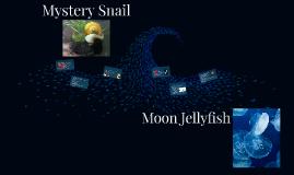 Mystery Snail