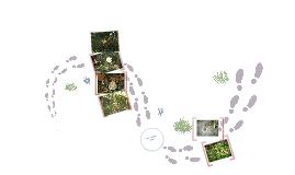 La forêt des Vaseix