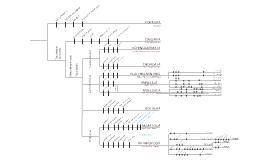 Master Cladogram