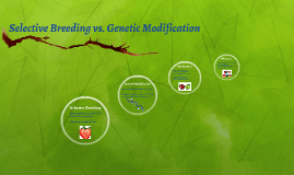 Selective Breeding vs. Genetic Modification