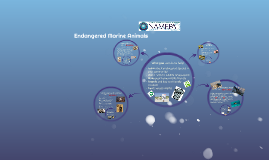 Endangered Marine Animals