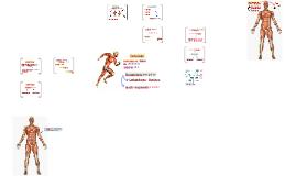 Proteínas - Produção energética