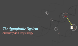 Copy of The Lymphatic System